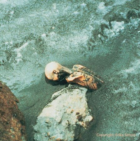 The first picture of Ötzi as he emerged from the melting ice