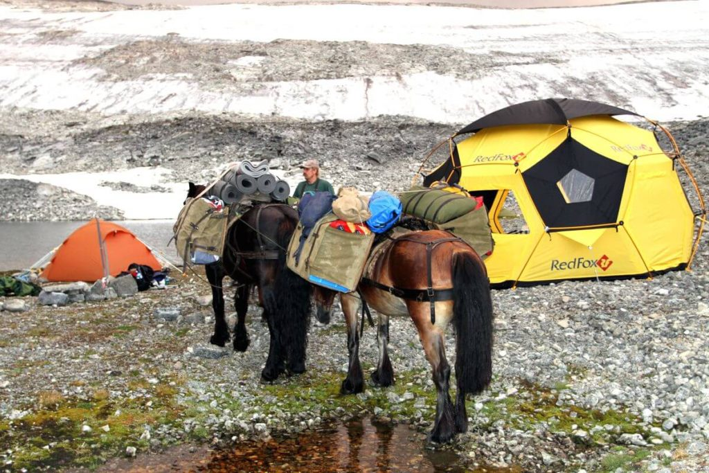 Jakop Brennhaug and his packhorses in the Lendbreen basecamp.