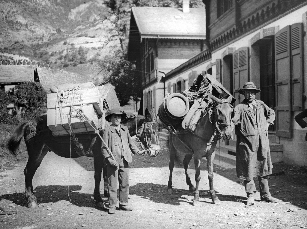 Pack mules in the Swiss Alpes, 1910.
