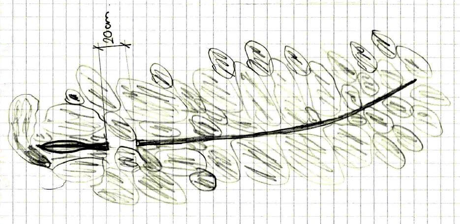 Original drawing from 1975 of how the spear was found lying in the scree